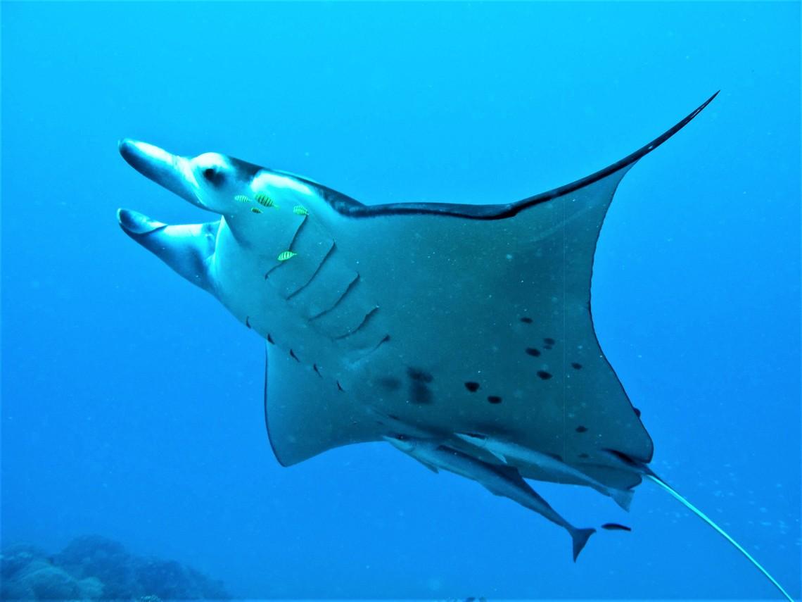 https://tahititourisme.jp/wp-content/uploads/2017/08/Bora-Bora-Reef-Discovery-3.jpg
