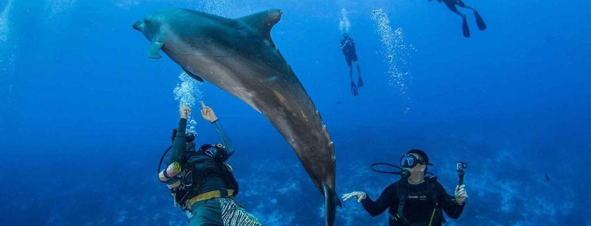 https://tahititourisme.jp/wp-content/uploads/2017/10/Rangiroa-Diving-Center-1150x440px.jpg