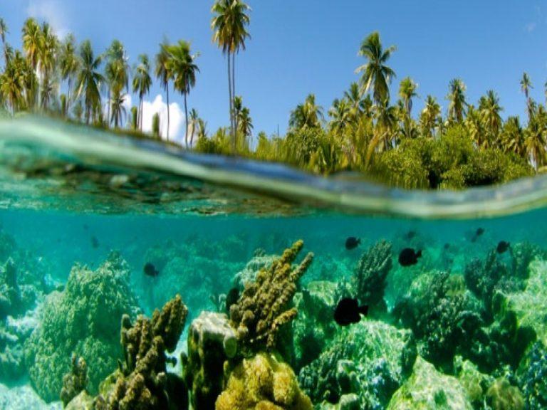「本物のリゾート」タハア島+タヒチ島8日間