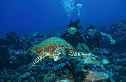 【離島にて朝食付き】 ターコイズブルーの海が絶景 ランギロア島8日間