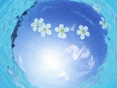 【早得割引あり】タヒチ島 タヒチパールビーチリゾート6日間