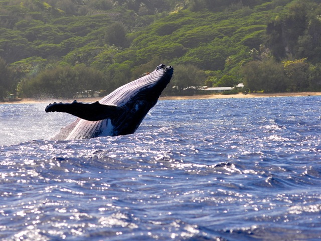 ルルツ島でクジラ体験8日間!!