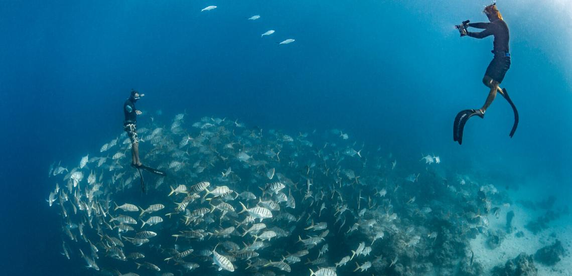 https://tahititourisme.jp/wp-content/uploads/2020/02/SnorkelingExpeditions_1140x550.png