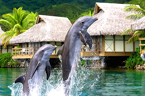 永遠の楽園 モーレア島3泊+タヒチ島6日間