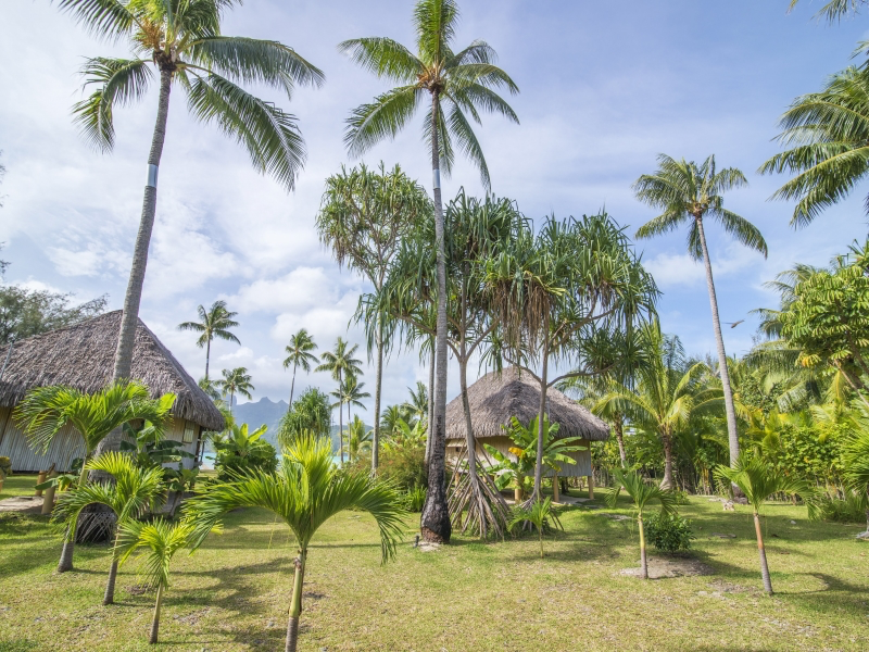 https://tahititourisme.jp/wp-content/uploads/2020/04/image-43.png