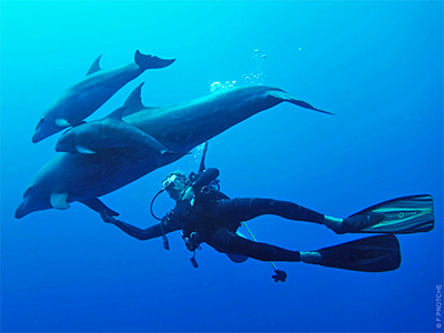 https://tahititourisme.jp/wp-content/uploads/2020/04/image-63.png