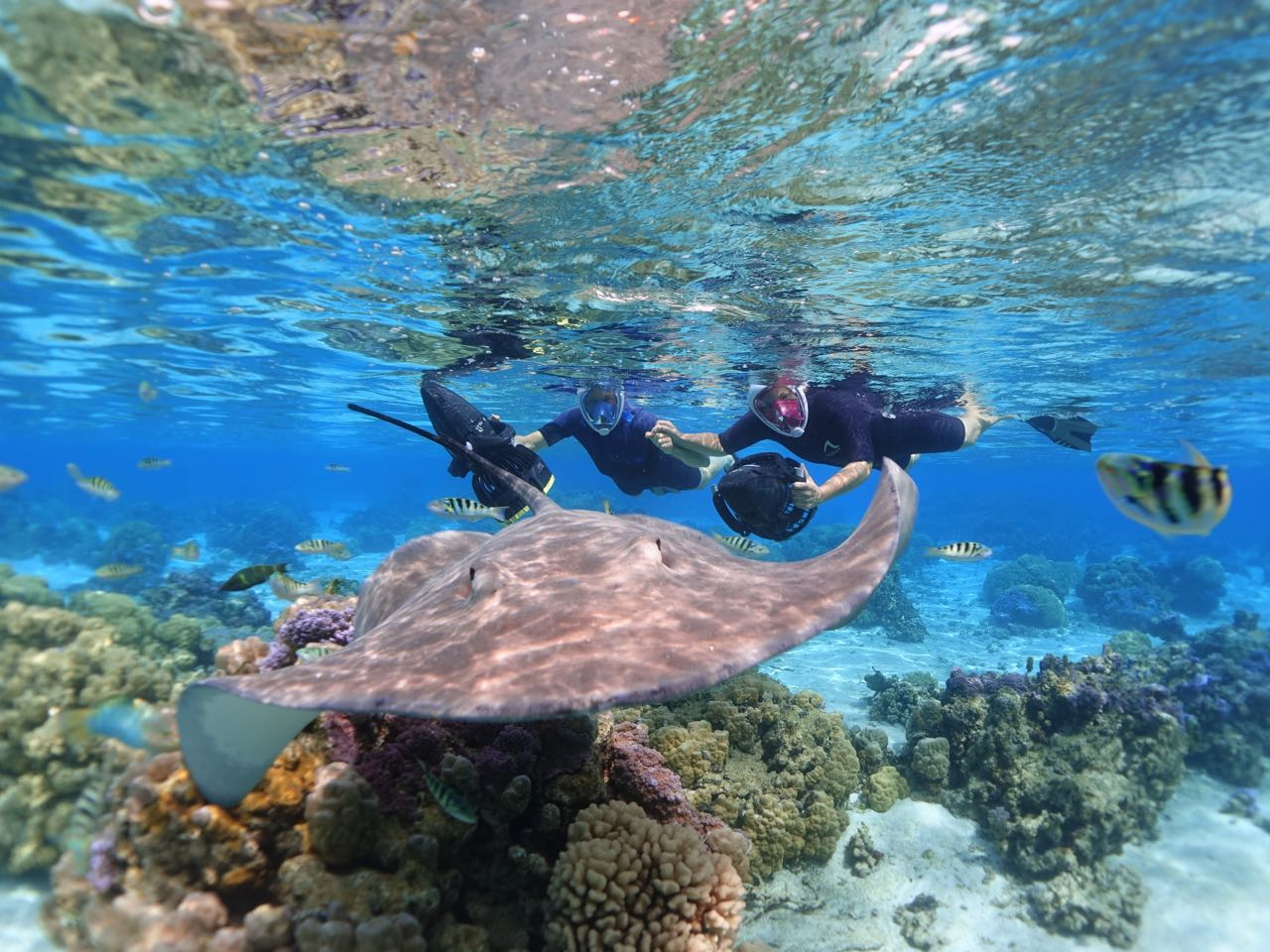 https://tahititourisme.jp/wp-content/uploads/2020/09/Sea-Scooter-Snorkeling-Tour-à-moorea-copie-2.jpg
