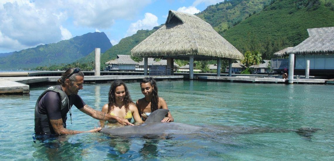 https://tahititourisme.jp/wp-content/uploads/2021/01/Offre_Moorea-Dolphin-Center.jpg